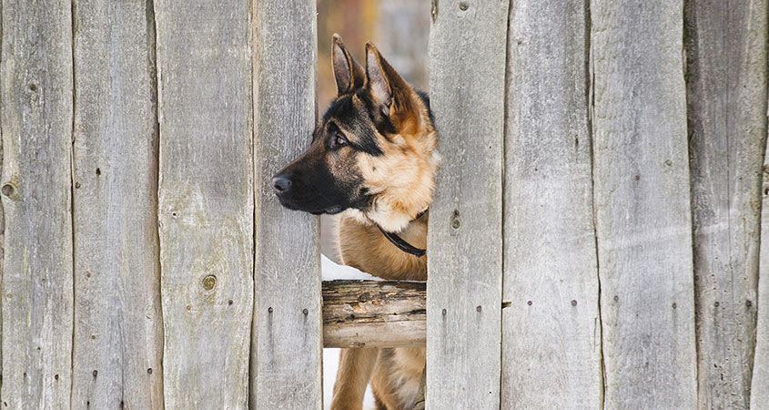 How-to-keep-your-dog-from-escaping_0