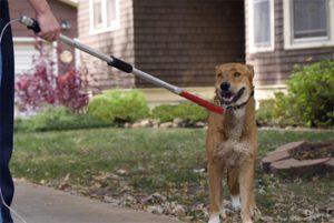 Massachusetts dog bite injury attorneys, Ballin & Associates.